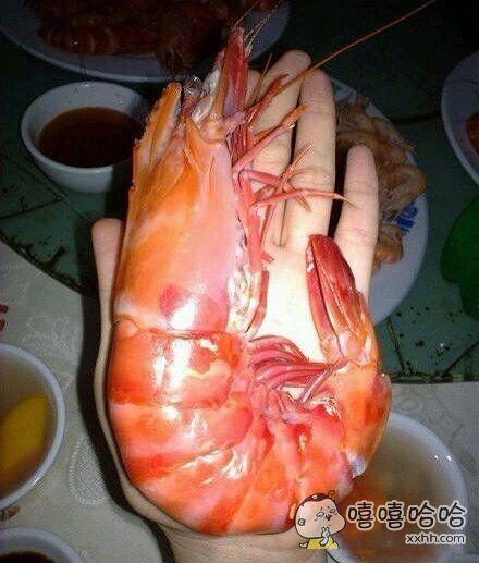 最近饭量减小,一只虾就吃饱了