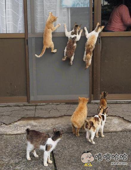 屋内人正在做饭,屋外的流氓们已经开始强势围观了