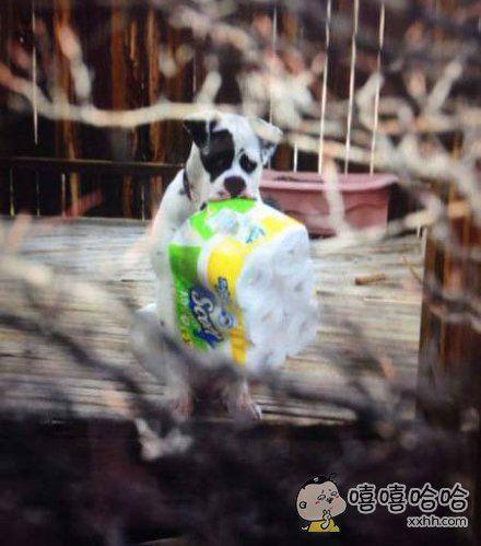 单身狗用个纸还被你们发现了
