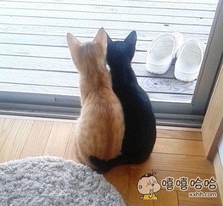 一主人表示,早上起来晒个太阳,却一不小心就被家里猫咪发了喵粮