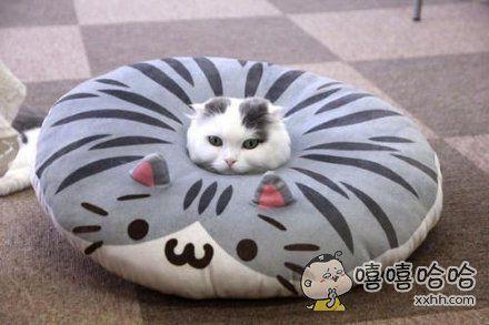 垫子放太久了容易长猫