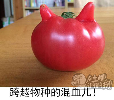 喵星人:朕昨晚好像日了个番茄