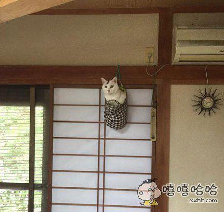 回家找了半天都没找到家的猫。。。突然传来响声,结果抬起头一看