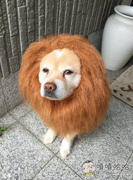 什么样的主人就有什么样的狗狗