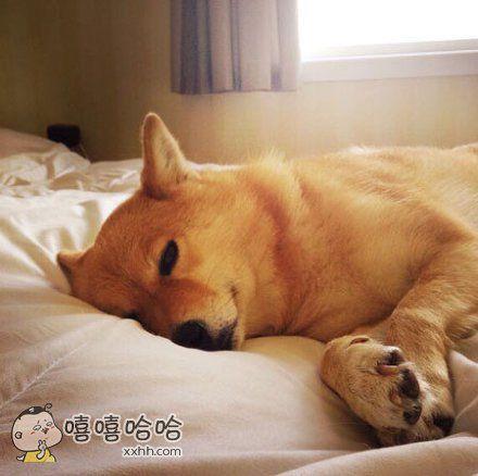 别理我,让我静静地赖个床