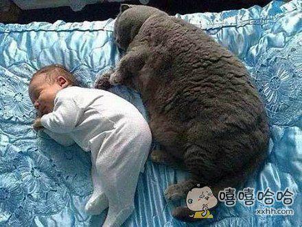 养个儿子,还没有猫咪长得快