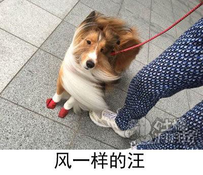 狗:妈的,老子的发型又乱了