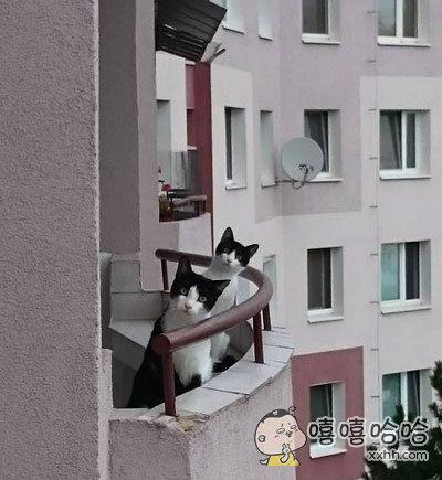 看到隔壁新搬来的邻居时。。。。