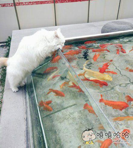 喵:这活鱼汤看来不错