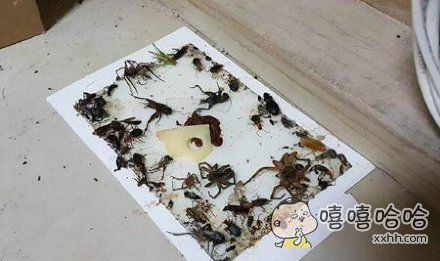 澳大利亚人表示:他们只是想单纯的抓一只老鼠!