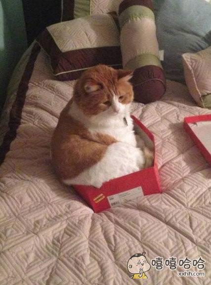 养猫不能懒,要勤换盒。