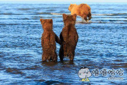国家公园的水边,拍到了两只小熊手牵着手,等待母亲捕鱼归来的照片。