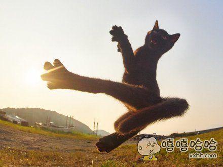 一位摄影师镜头下的夕阳野猫