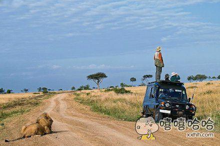 狮子:hello,看我啊!