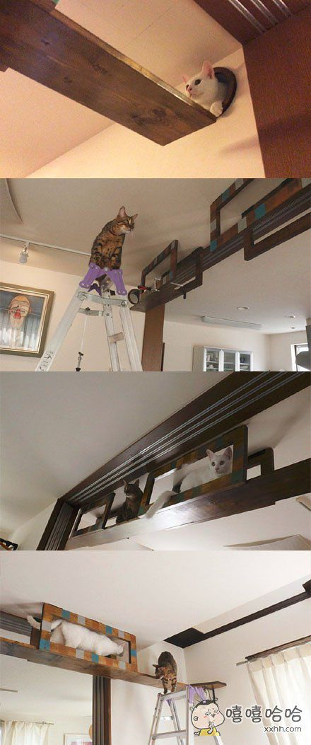 为了猫主子过得舒适,猫奴们在房屋装修方面也是操碎了心~