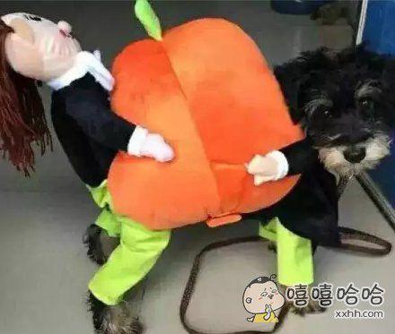 狗:妈的智障