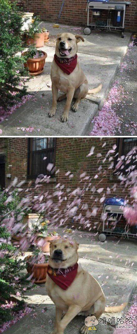 本想拍个花瓣飘飞的浪漫情景,结果。。。