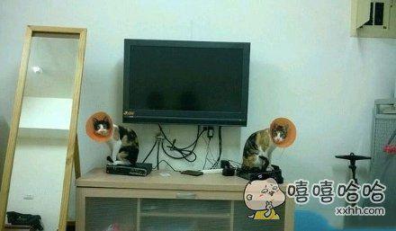 给电视加装了两个喇叭