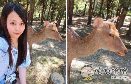 这个台湾妹子很高兴的跑去和奈良鹿合影,结果。。。
