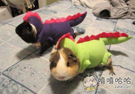 恐龙出没请小心哦