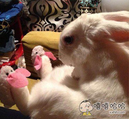 兔子穿上兔子鞋,好困惑