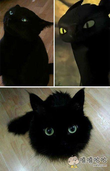 这只黑猫简直就是现实版的无牙仔!