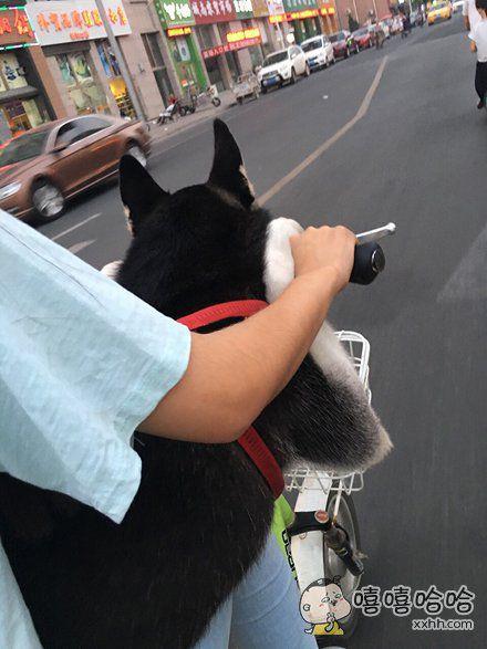 养了一只懒癌晚期的狗狗是什么体验