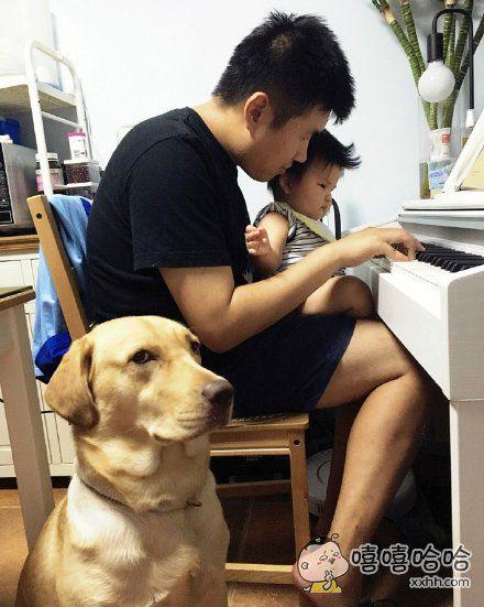 汪:不理我,晚上把钢琴给你俩啃喽。