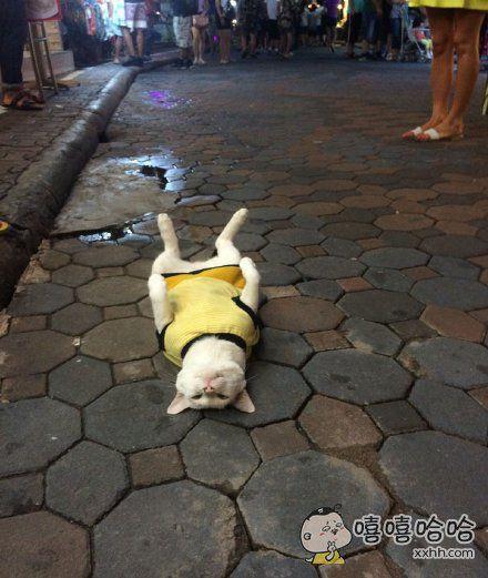 在芭提雅步行街上看到一只猫~它主人在店里工作,它就在店门口睡觉,哪里都不肯去,路人怎么摸它咯吱它都不动,好羞耻哦