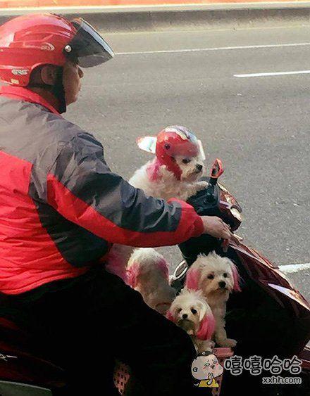 警察叔叔,这有三个骑摩托车没戴安全头盔的