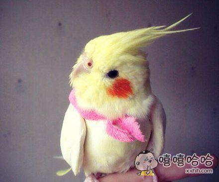 一只自带腮红的鸟