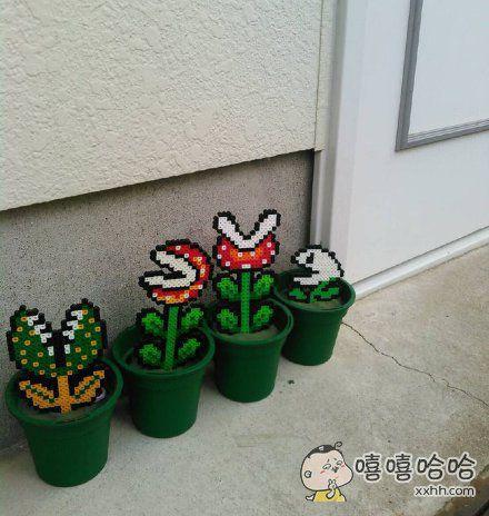 推上一小哥困惑地表示,邻居家的盆栽不知道是什么品种,却还看着有点眼熟呢