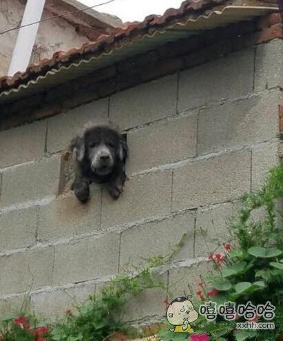 邻居家的阿汪好可怜啊