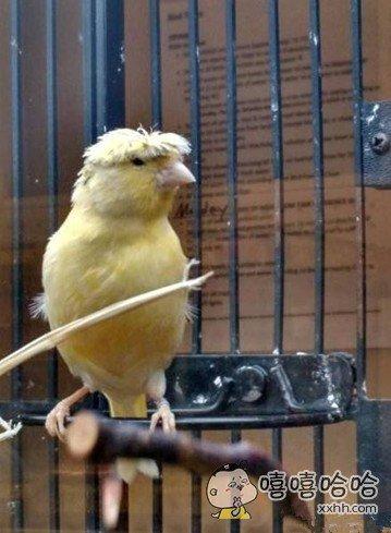 小鸟的发型挺霸气啊