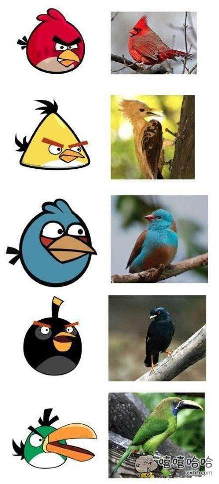 找全愤怒的小鸟的原形了