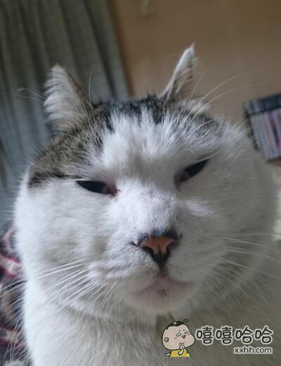 总有人说我家猫丑