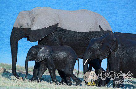 """小象:""""爸爸妈妈,怎么才能知道水有多深呢?"""" 爸爸:""""这还不简单……"""" 妈妈:""""我不想知道……"""""""
