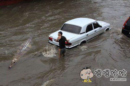 鳄鱼:我真的是来帮忙推车的