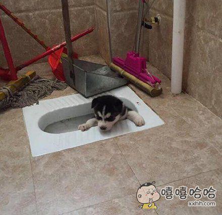 反复教小二哈拉屎要去厕所里蹲着,不仅学不会,还掉下去了。。。