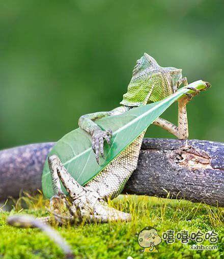 发现一音乐天才