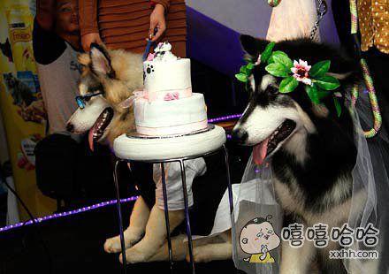 以后再不能说自己是单身狗了,连狗都结婚了