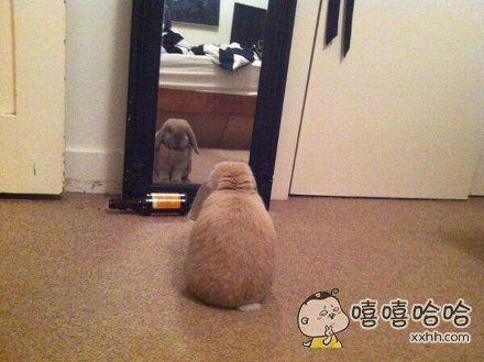 网友家兔子每天都要蹲在镜子前看一会儿,思考一下兔生