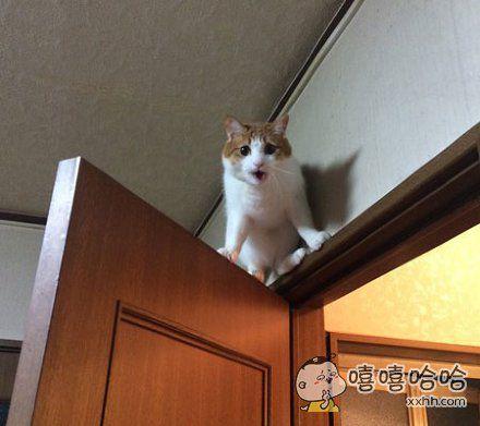 你现在开门是什么意思?你想害死朕吗?