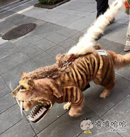街头有人遛一头猛兽
