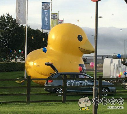 苏格兰的大黄鸭