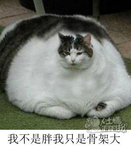我不是胖我只是骨架大