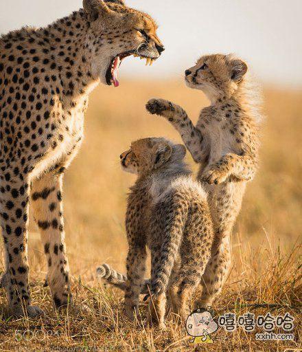 """""""妈,我…"""" """"不行!!!!"""""""