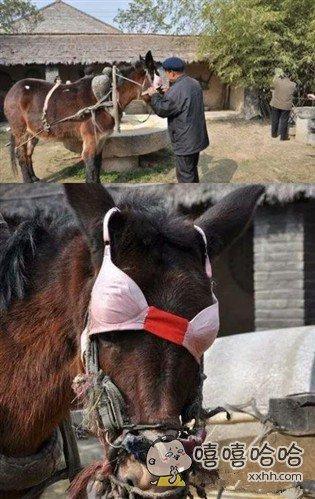 大爷为了让驴干活也太没节操了