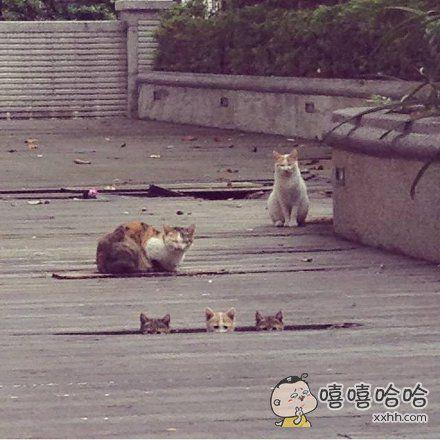一个女网友经常去公园喂流浪猫,这次去的时候发现多了三个喵星人,初次见面还有点害羞,怯生生的看着她