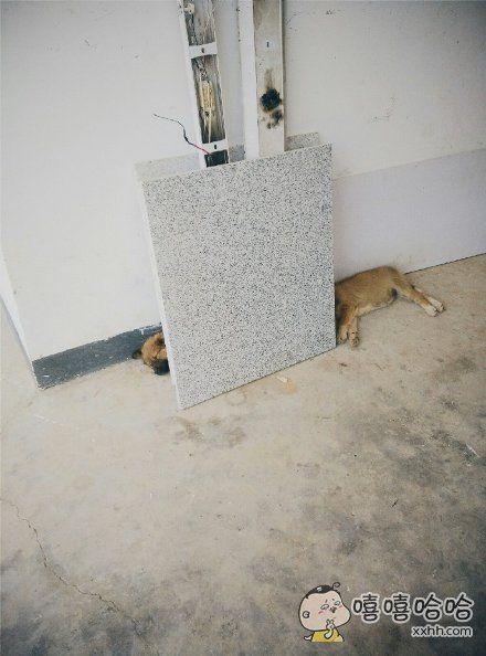 白天发现的一只长颈狗,脖子还可以伸缩。